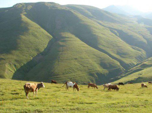 Gruzijos ganyklos kalnuose