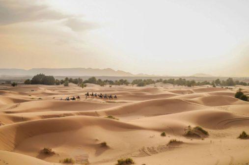 Sacharos dykuma