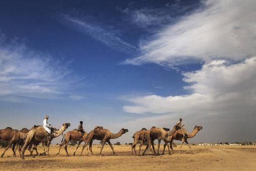 Safaris Jaisalmeryje