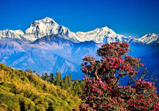 Nepalo kalnai