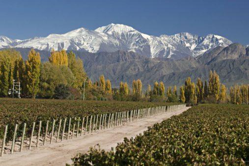 Vynuogynai Čilė