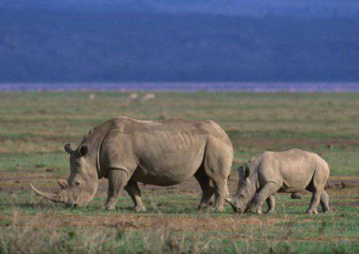 Ngorongoro gyvūnai