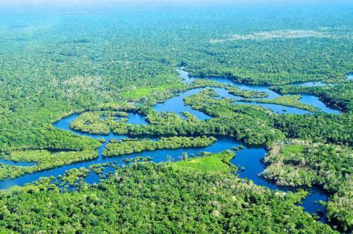 Brazil-rainforest