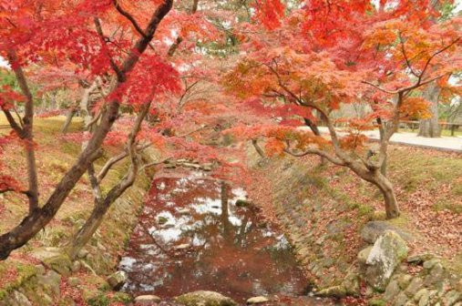 Nara parkas